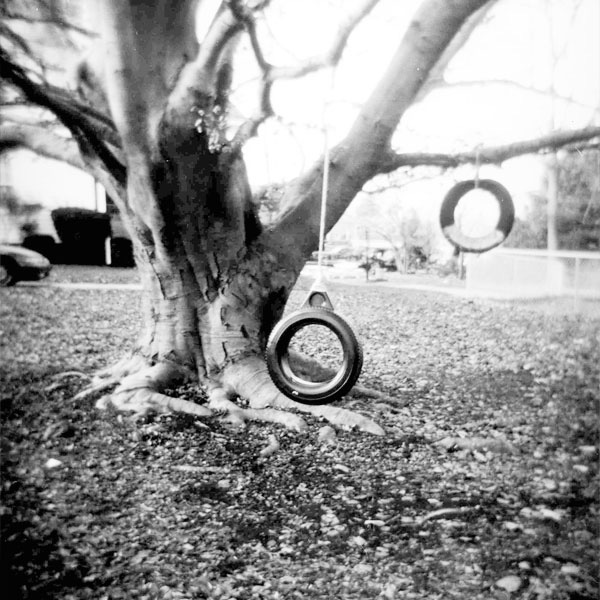 Tire Swinging Tree